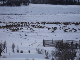 Tady se přikrmují v zimě jeleni a sobi.<br />_________<br />This is winter deer and elk feeding area.