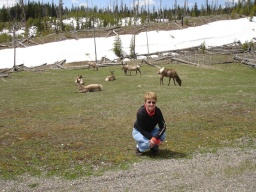 "<div><font size=""1"">Maminka a jelení stádo.</font></div>