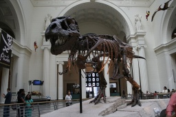 """<p class=""""MsoNormal"""" style=""""MARGIN: 0in 0in 0pt""""><font size=""""1"""">Tyranosaurus Sue je nejúplnější kostrou tyranosaura doposud nalezenou.</font></p><p class=""""MsoNormal"""" style=""""MARGIN: 0in 0in 0pt""""><font size=""""1"""">______________<br />T-Rex Sue is the most complete skeleton of a Tyrannosaurus found so far.<o:p></o:p></font></p>"""