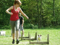 Jungle-flyball