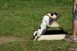 Jubgle-flyball