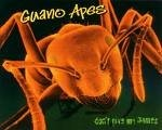 Guano Apes - Don´t give me names - obrázek