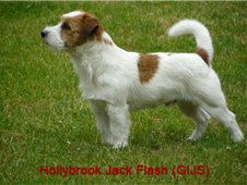 Hollybrook Jack Flash 3.jpg