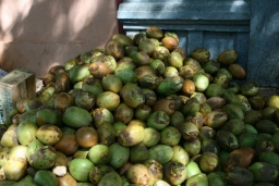 "<div>Tento druh kokosu je bohat<span dir=""rtl"">‎ý na vodu.<br />_________<br />This kind of coconut is full of water</span></div>"